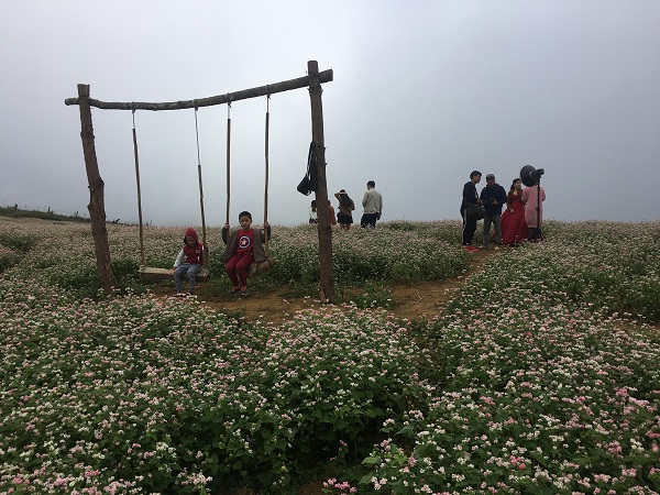 Mê mẩn ngắm đồi hoa tam giác mạch trên cao nguyên Mộc Châu lộng gió - 2