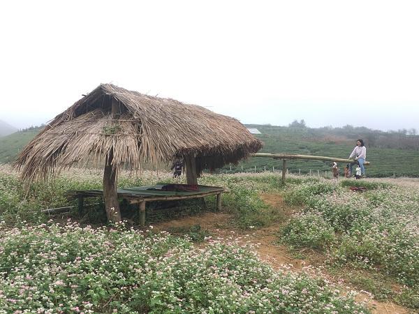 Mê mẩn ngắm đồi hoa tam giác mạch trên cao nguyên Mộc Châu lộng gió - 5