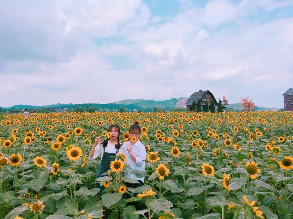Thiên đường hoa hướng dương khiến giới trẻ ngây ngất ở Bắc Giang - 2