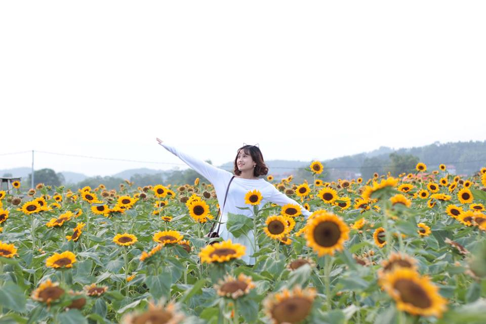 Thiên đường hoa hướng dương khiến giới trẻ ngây ngất ở Bắc Giang - 3