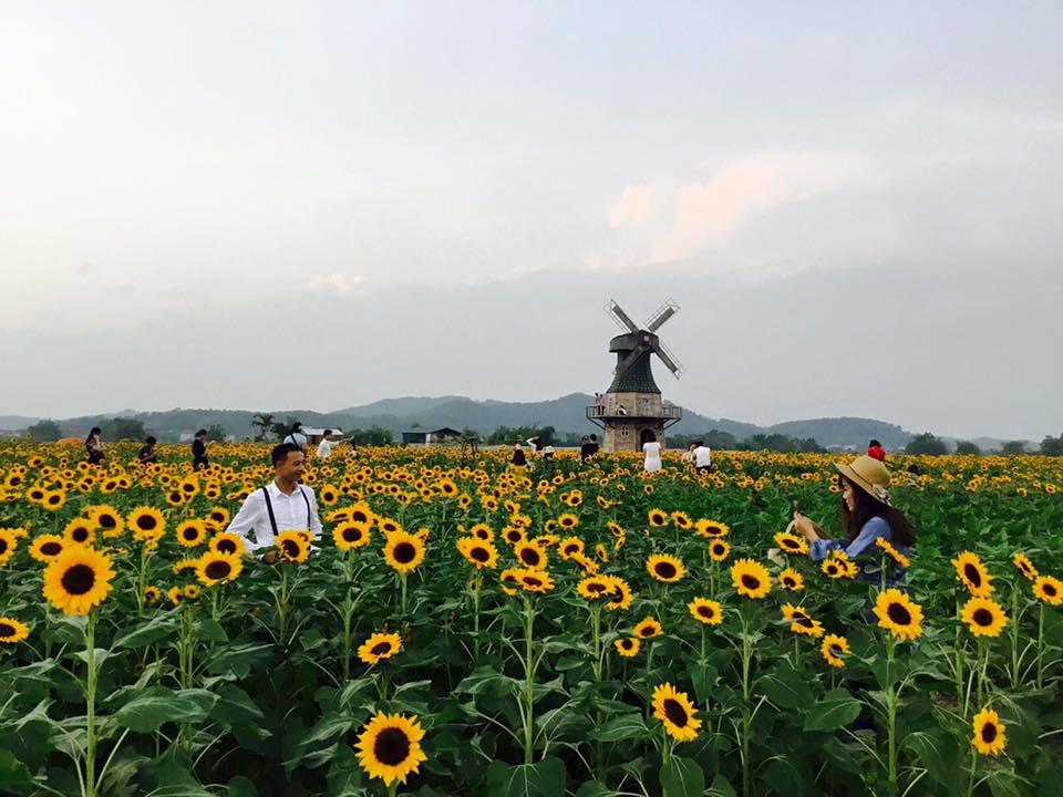 Thiên đường hoa hướng dương khiến giới trẻ ngây ngất ở Bắc Giang - 4