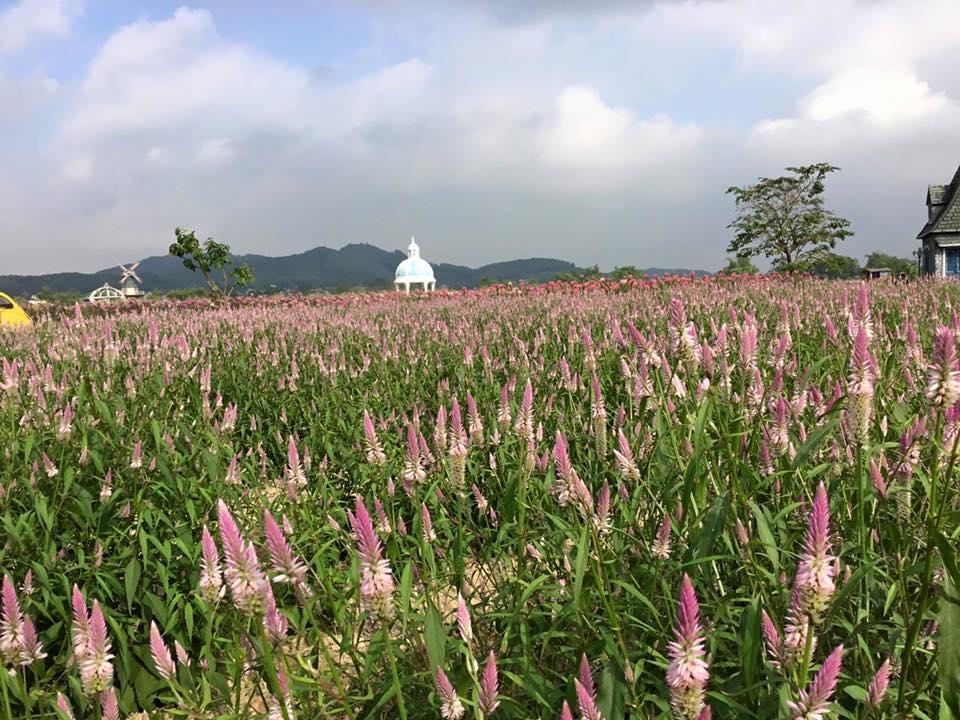 Thiên đường hoa hướng dương khiến giới trẻ ngây ngất ở Bắc Giang - 8