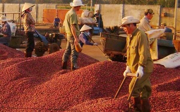 Xuất khẩu tiêu, cà phê chưa hết lo trong năm 2019 - 1