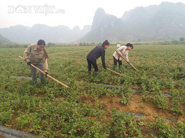 Giám đốc trẻ đưa cả làng ăn nên làm ra nhờ loài cây dại - 3