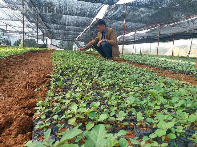 Giám đốc trẻ đưa cả làng ăn nên làm ra nhờ loài cây dại - 4