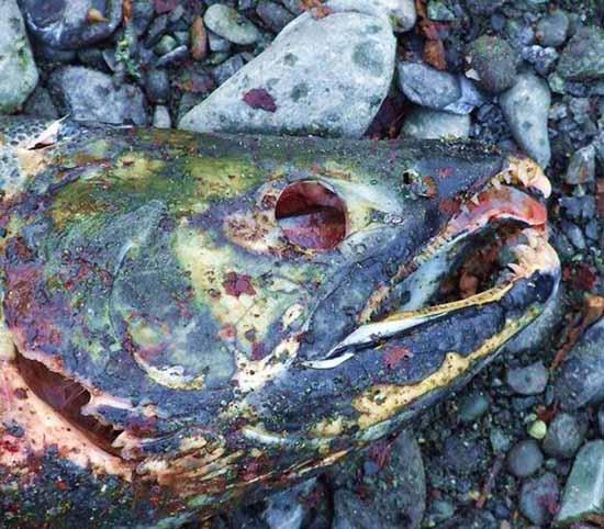 Tránh xa hàng cây số với 6 món cá bốc mùi nhất thế giới - 8
