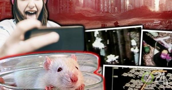 Thí nghiệm trên chuột dự báo sự tuyệt diệt của nhân loại