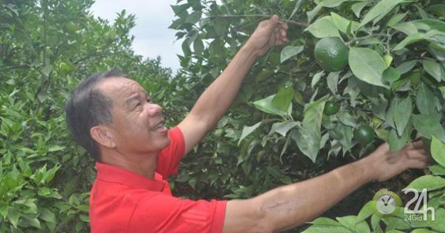 Chỉ trồng cam Canh, mỗi năm mua một ô tô ngon ơ