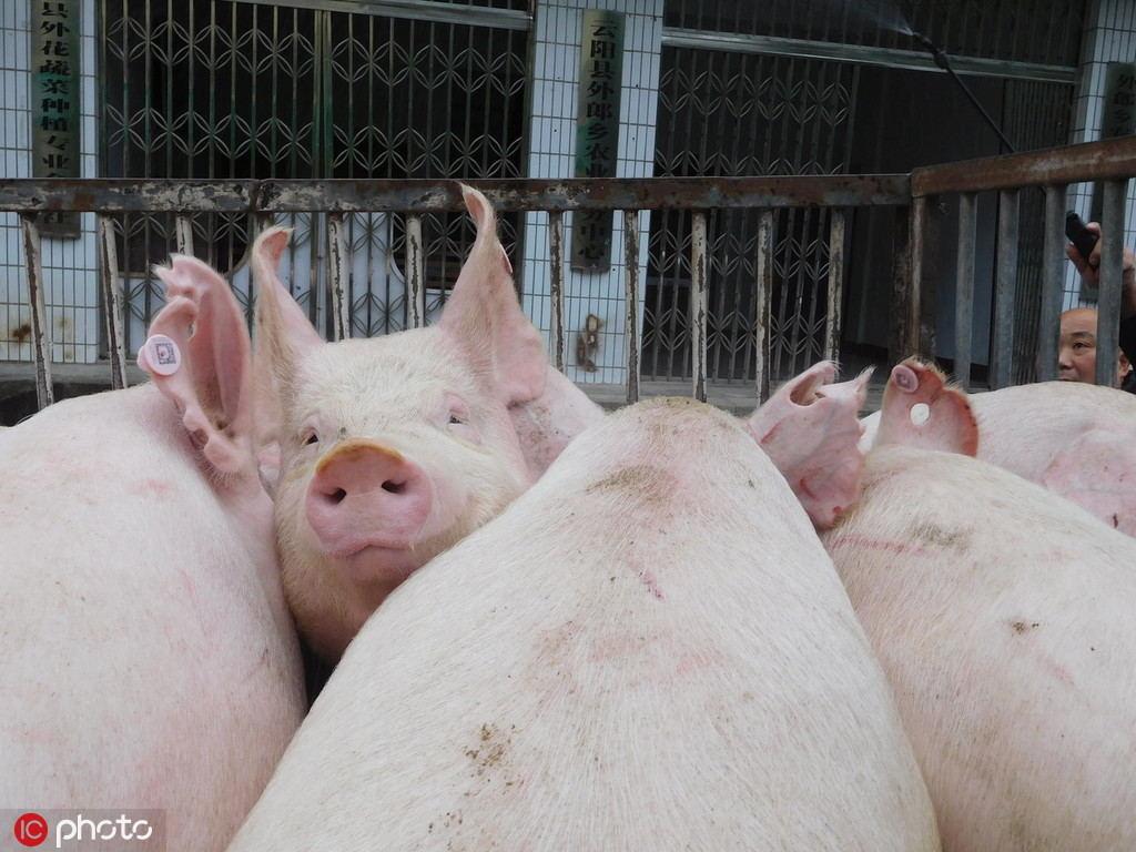 Khốn đốn nguồn cung, Trung Quốc tiếp tục xả kho 10.000 tấn thịt lợn - 1