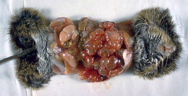 Những ký sinh trùng kinh dị nhất có thể ẩn nấp trong thức ăn của bạn - 4