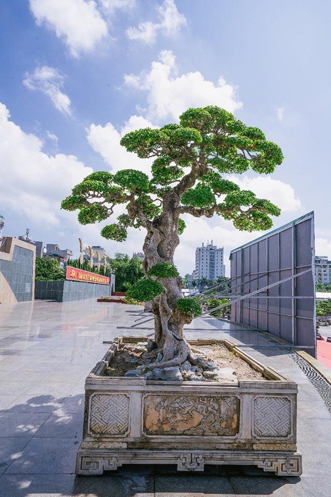 Festival cây cảnh – đá quý – đá phong thủy quy tụ hàng nghìn cây cảnh độc đáo - 2