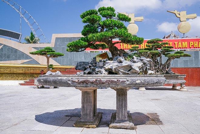 Festival cây cảnh – đá quý – đá phong thủy quy tụ hàng nghìn cây cảnh độc đáo - 3