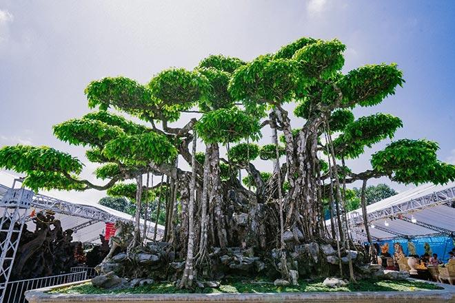 Festival cây cảnh – đá quý – đá phong thủy quy tụ hàng nghìn cây cảnh độc đáo - 5