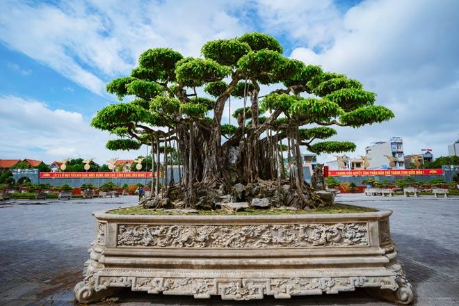 Festival cây cảnh – đá quý – đá phong thủy quy tụ hàng nghìn cây cảnh độc đáo - 1