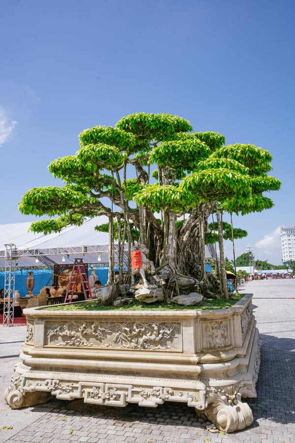 Festival cây cảnh – đá quý – đá phong thủy quy tụ hàng nghìn cây cảnh độc đáo - 4
