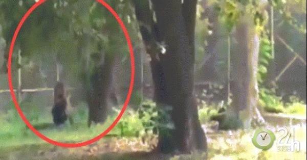 Video: Nhảy vào vườn thú, ngồi rồi nằm ra trước mặt sư tử như mời xơi và diễn biến sau đó