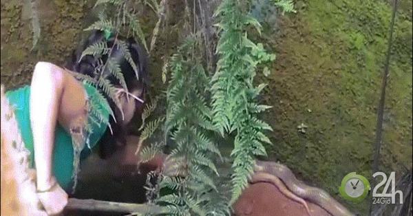 Thót tim cảnh người phụ nữ leo xuống giếng, bắt rắn hổ mang chúa cực độc-Thế giới