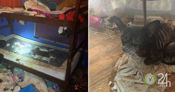 """Mỹ: Đột nhập ngôi nhà, phát hiện 3 đứa trẻ và 245 vật nuôi trong điều kiện """"thảm"""" chưa từng thấy-Thế giới"""