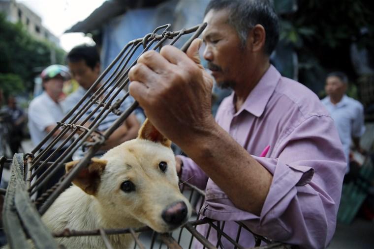Thiếu thịt lợn, dân Trung Quốc chuyển sang ăn thịt chó, giá lại siêu rẻ - 2