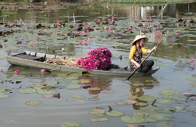 Ghé An Giang mùa nước nổi, mê mẩn ngắm cánh đồng hoa súng đẹp như mơ - 14