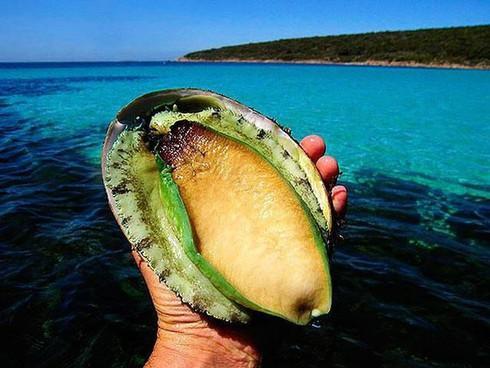 Gần chục triệu đồng một kg bào ngư xanh, nhà giàu Việt mua về tẩm bổ - 1