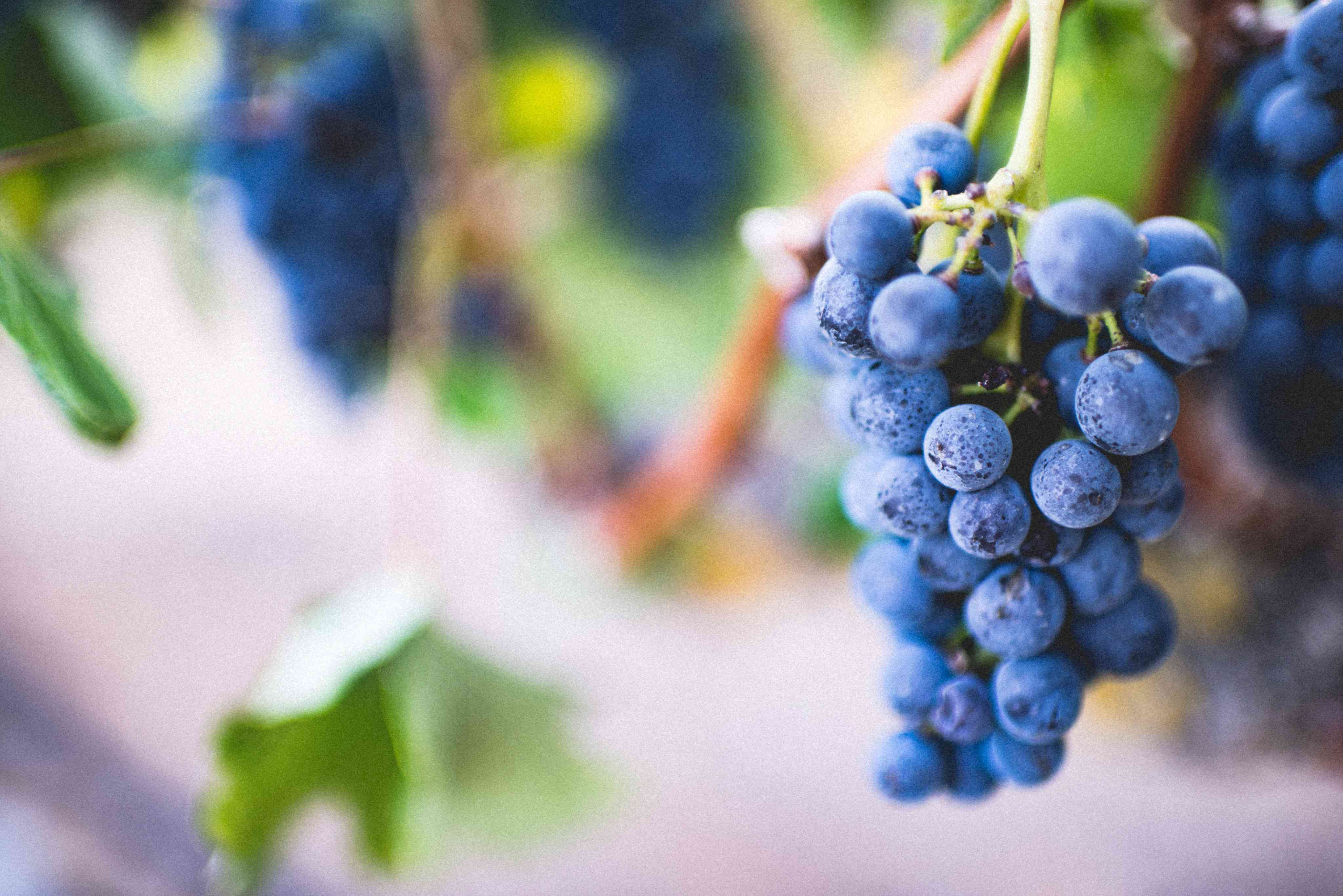 10 loại trái cây tốt nhất cho cơ thể - 3