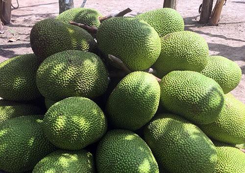 Nghịch lý mít Thái 50-70.000 đồng/kg, cam Việt rẻ như bèo chỉ 9-10.000 đồng/kg - 1