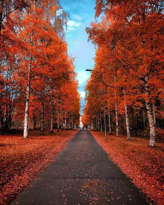 Mùa thu ở các nước trên thế giới rực rỡ và đẹp đến nhường nào? - 11