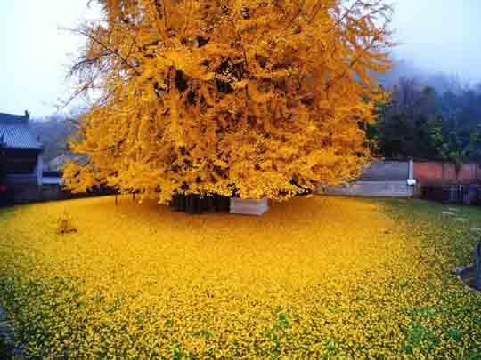 Mùa thu ở các nước trên thế giới rực rỡ và đẹp đến nhường nào? - 12
