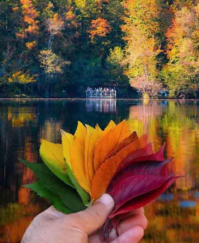 Mùa thu ở các nước trên thế giới rực rỡ và đẹp đến nhường nào? - 2