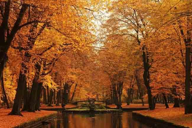 Mùa thu ở các nước trên thế giới rực rỡ và đẹp đến nhường nào? - 8