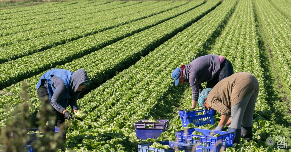 Anh tăng gấp bốn lần lao động nhập cư, cơ hội rộng mở-Thế giới