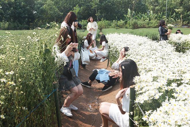 Một mét vuông, 10 thiếu nữ chen nhau chụp ảnh với cúc họa mi - 6