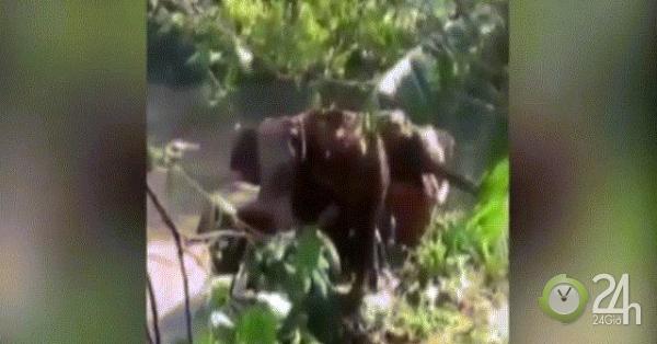 Video: Khoảnh khắc voi mẹ cảm tạ người tốt bụng cứu sống voi con