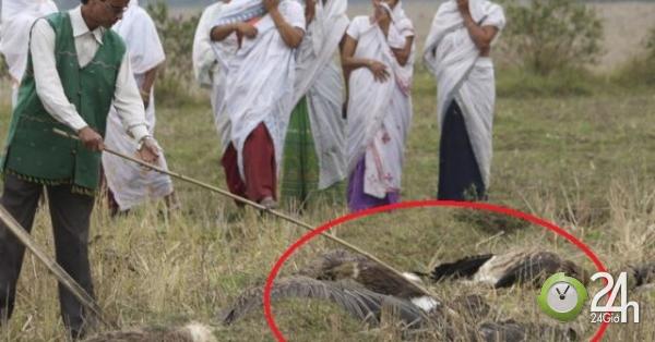 Ấn Độ: Hơn 1.000 con chim đang sống bỗng lăn ra chết bí ẩn