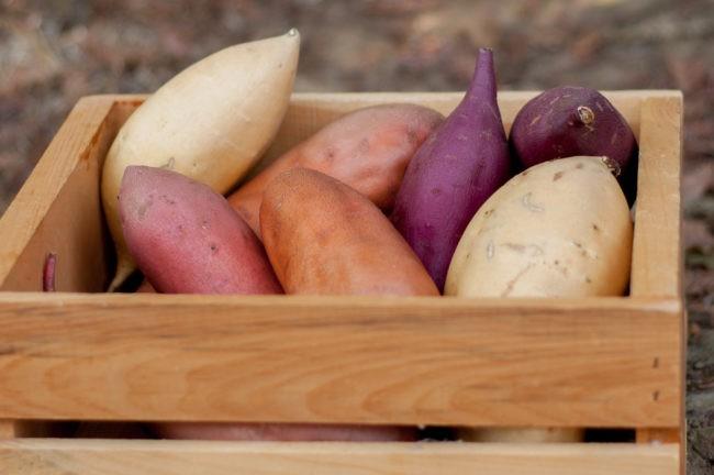 """Không muốn hỏng thận, """"nát"""" dạ dày thì tránh những điều này khi ăn khoai lang - 1"""