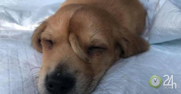 Chó kỳ lân xuất hiện gây náo loạn cộng đồng mạng