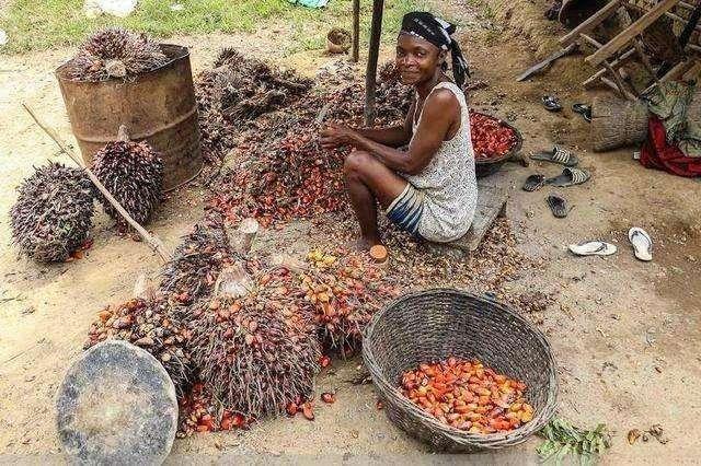 Hốt hoảng trước những thực phẩm nhìn thôi đã thấy sợ ở chợ châu Phi - 7