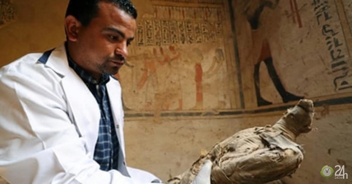 Hé lộ bí ẩn hàng triệu xác ướp chim trong lăng mộ Ai Cập
