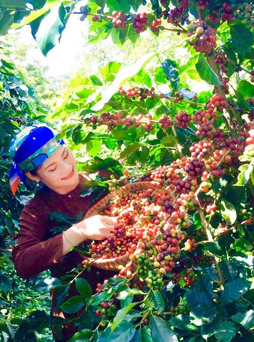 Thương hiệu cà phê Quỳnh Anh - 20 năm dành hết tâm huyết cho hạt cà phê - 4