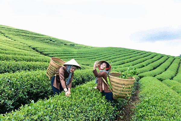 Thương hiệu cà phê Quỳnh Anh - 20 năm dành hết tâm huyết cho hạt cà phê - 5
