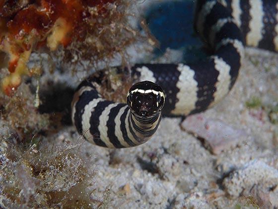Nhắm mắt liều mình ăn thử đặc sản rắn độc ở Okinawa - 2