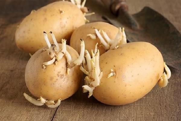 """Ăn khoai tây kiểu này là """"hạ độc"""" cơ thể, dừng ngay kẻo nguy hiểm tính mạng - 2"""