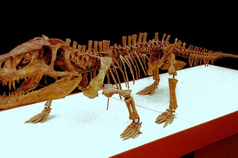Bộ xương sinh vật 250 triệu năm tuổi giống rồng với đầu khổng lồ