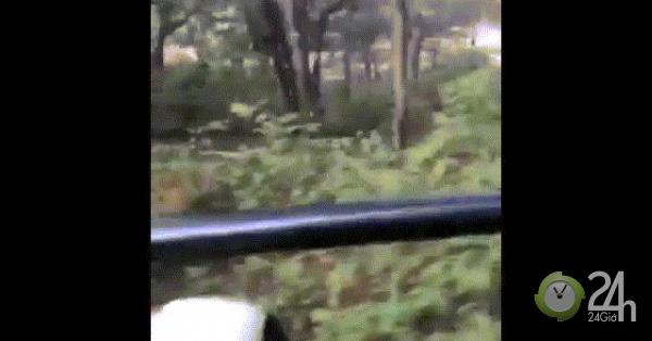 Hố bất ngờ lao ra đường, đuổi xe chở du khách chạy trối chết
