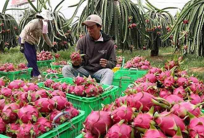 Hàng loạt trái cây giảm giá mạnh do Trung Quốc siết chặt - 1