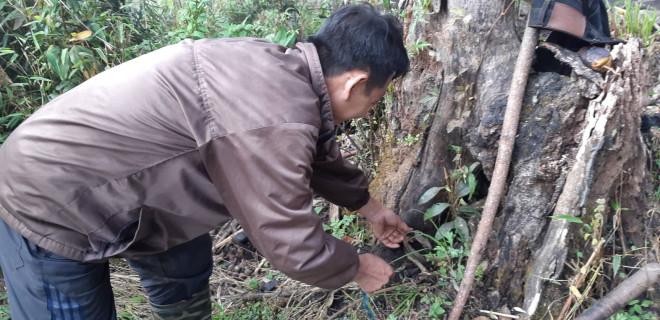 Săn chuột rừng béo nung núc trên đỉnh Kỳ Quan San - 1