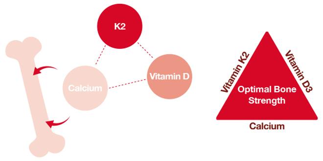 """Vitamin K2 – Chuyên gia tăng chiều cao cho trẻ, """"khắc tinh"""" của loãng xương - 2"""