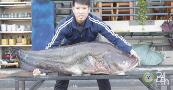 Choáng với cặp cá leo nặng hơn 1 tạ lần đầu tiên xuất hiện ở Hòa Bình - Tin tức 24h