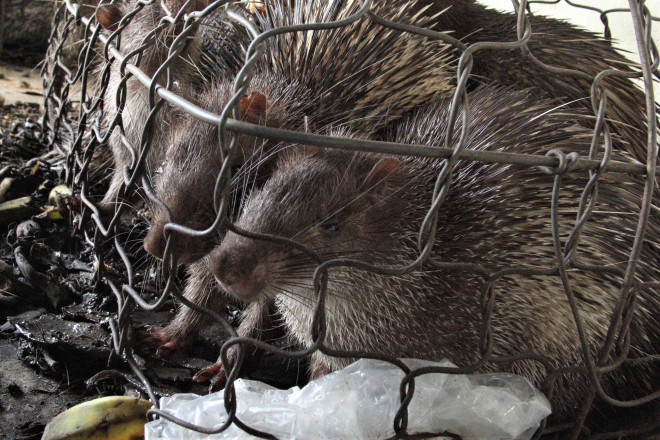 Thú rừng chết dần trong kho hải quan: Tỉnh Quảng Trị chỉ đạo khẩn